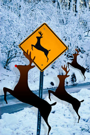 Reindeer Crossing at Christmas with an unexpected twist as these deer cross the snow covered and wintery highway.