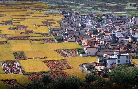 gratifying: farmland scenery