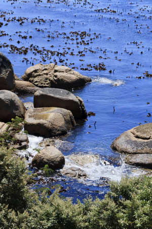 Closeup of Kelp and boulders in Africa Stock Photo - 12842238