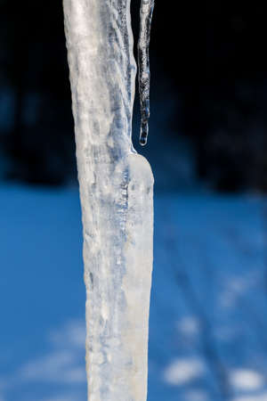 other keywords: Close up of long icicle melting in the sun