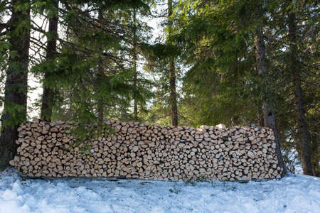 Large freshly chopped wood pile in the shade in the forest North of Oslo Standard-Bild