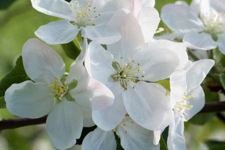 few apple-tree flowers on a bright sunny day