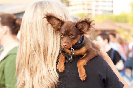 blonde woman carries a toy terrier on her shoulder