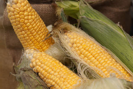 few cobs of ripe sweet corn lie near the bag in a warehouse or in a store or market