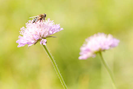 funny fly sits on a delicate pink flower growing in a summer park or in a meadow