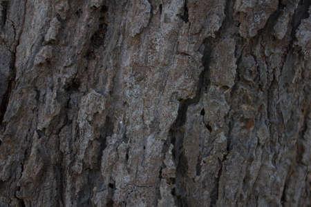 bark background texture: bark background texture Stock Photo