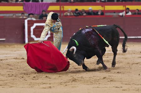 bullfight: Bullfighter in a bullring