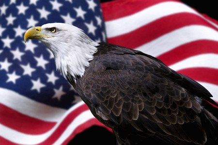 eagle flying: American eagle with flag