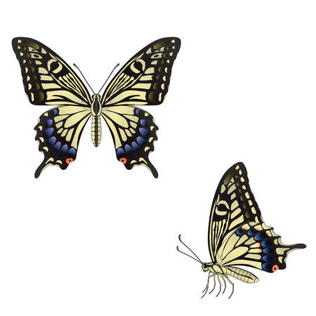 The butterfly  on a white background. Vector Vector