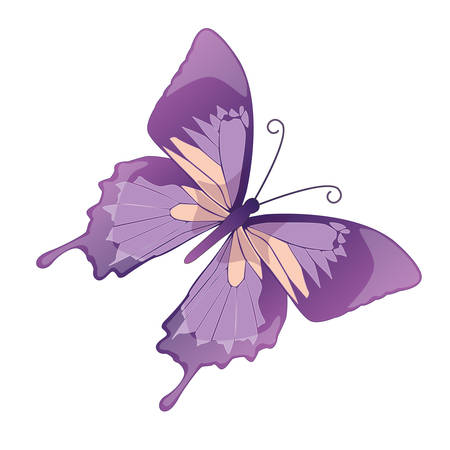 feeler: The butterfly  on a white background. Vector Illustration