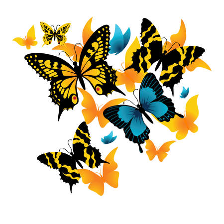 feeler: The butterfly on a white background. Vector illustration  Illustration