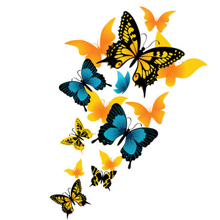 The butterfly on a white background. Vector