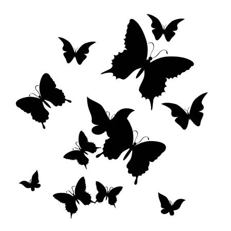 feeler: silhouette of butterfly on a white background.vector