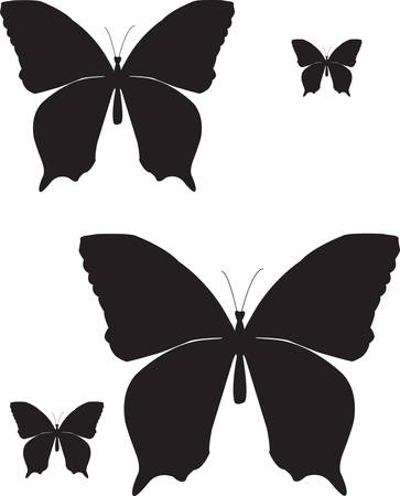 focus on shadow: silhouette of butterflies on a white background