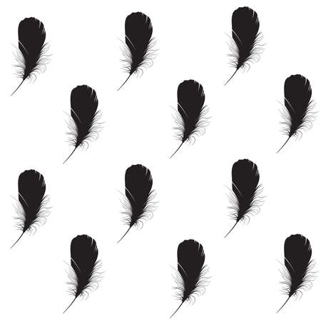silhouette of feather on a white background. photo
