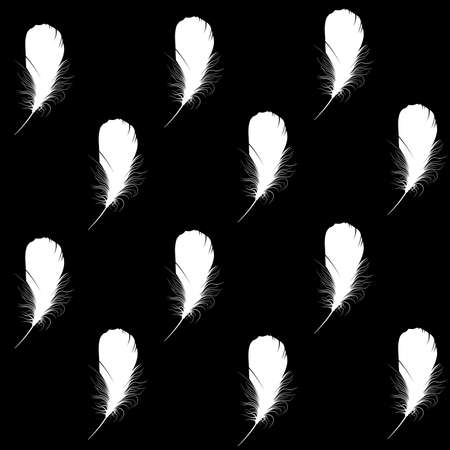 white feather on a black background photo