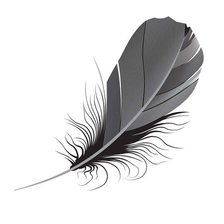 feather on a white background. photo