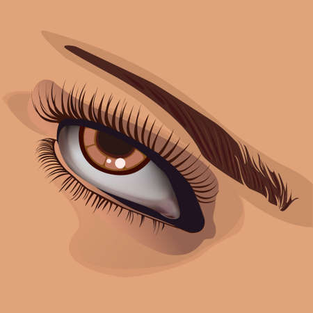 contrasts: Human eye and eyebrow on corporal colour.vector