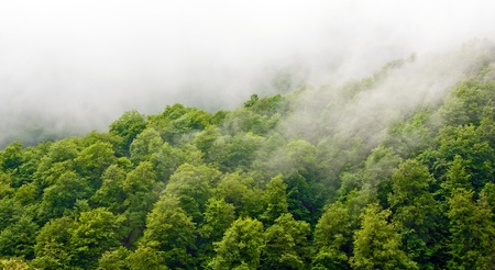 Gorgeous green forest in the fog after rain photo