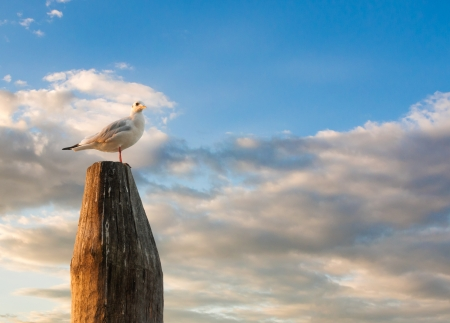 bird eye view: White dove standing on the stick during sunset