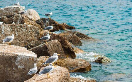 Group of sea Gulls on the rocks photo