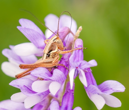 Macro shot of grasshopper sitting on the flower photo