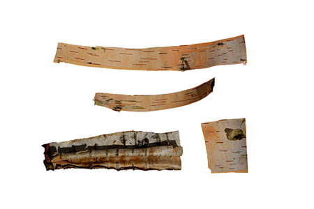 tree bark in the form of a scroll isolated on white background