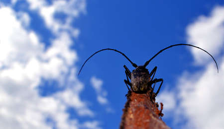 beetle with a big mustache, sitting on a piece of bark and looking into the cloudy distance