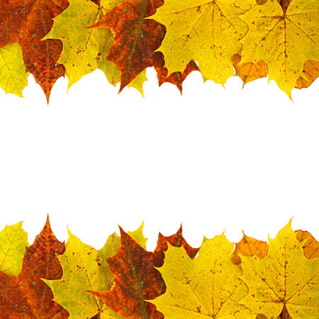 Autumn background composed of maple leaves isolated on white Stock Photo