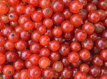 background of red currant berries Stock Photo - 17272774
