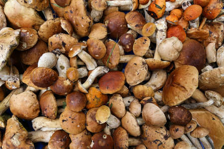 background from a variety of wild mushrooms Stock Photo
