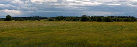 panorama of rural field in the evening before the rain