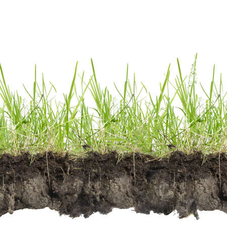 crosscut: green grass with earth crosscut isolated on white