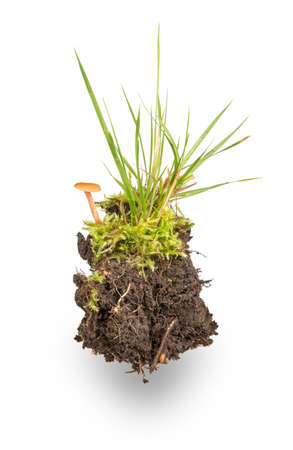 island of forest soil, moss, grass and mushrooms isolated on white background Stock Photo