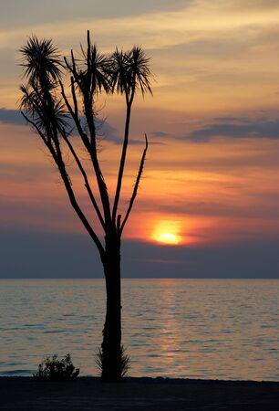 Amazing sunset behind tropical tree photo