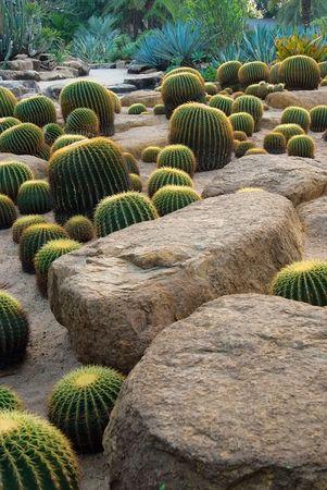 Cactus and stone Garden photo