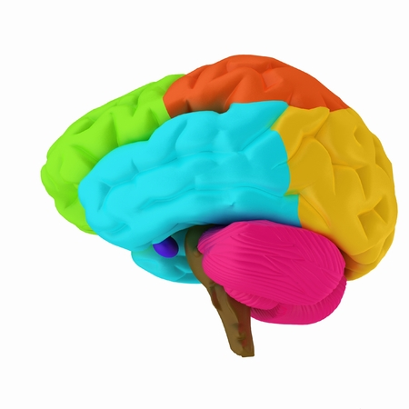 Colorfull human brain photo