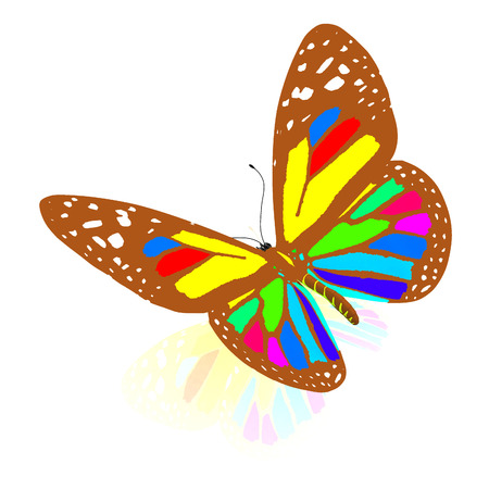 colorful butterfly: colorful butterfly Stock Photo