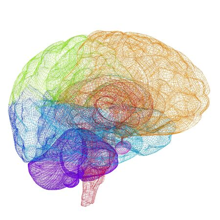 Creative concept of the human brain Reklamní fotografie - 31056988