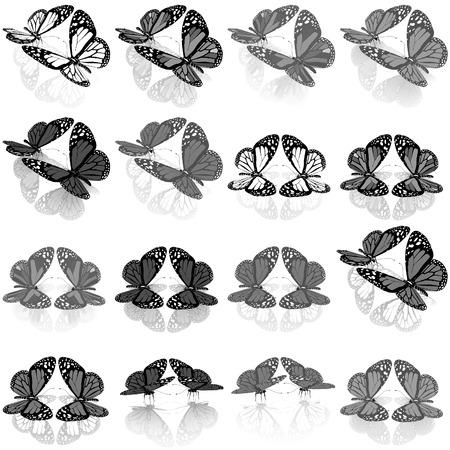 admiral: Butterflies botany set Stock Photo