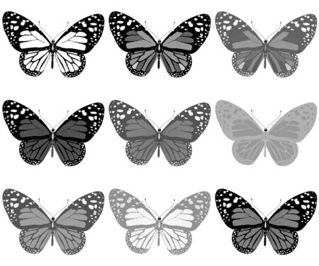 Butterflies botany set Stock Photo