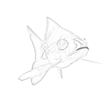 Gold fish. Isolation on a white background photo