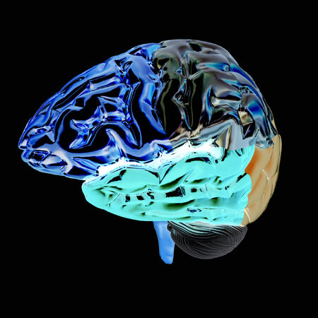 lobes: Colorfull human brain Stock Photo