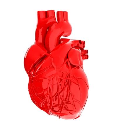 left atrium: Human heart