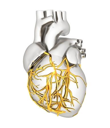 Human heart Reklamní fotografie - 34554277