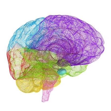 Creative concept of the human brain photo