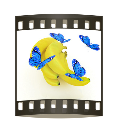 Blue butterflys on a bananas on a white background. The film strip photo