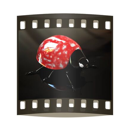 aon: Ladybird on aon a black background. The film strip