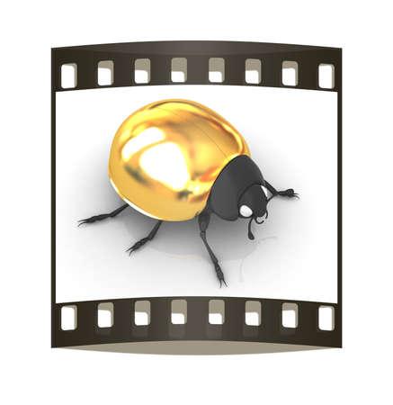 luxo: besouro dourado em um fundo branco. A tira de filme