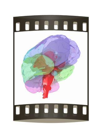mentality: Human brain. The film strip